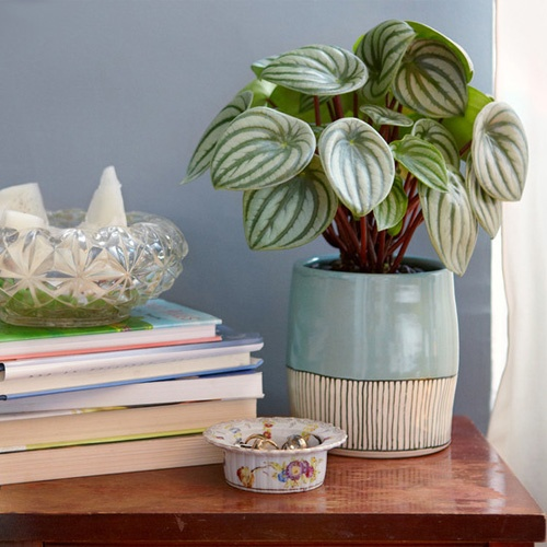 5 favorite houseplants - Most popular house plants ...