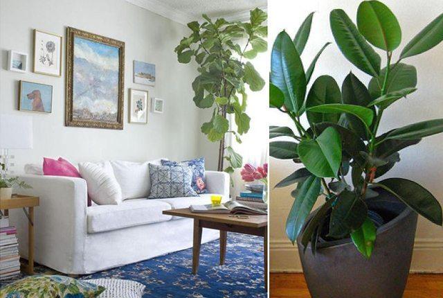 5 Favorite Houseplants